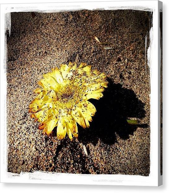 Sands Canvas Print - Flower In The Sand by Natasha Marco