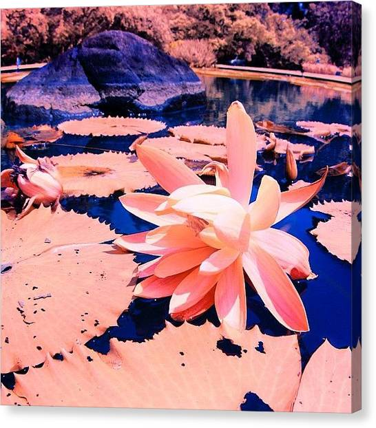 Igers Canvas Print - #flower #instahub #instagood #instamood by Tommy Tjahjono