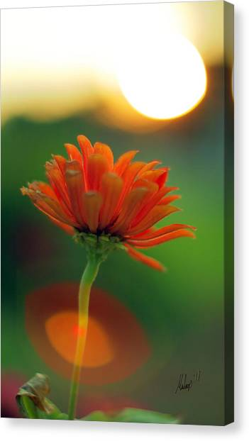 Flower Light Canvas Print