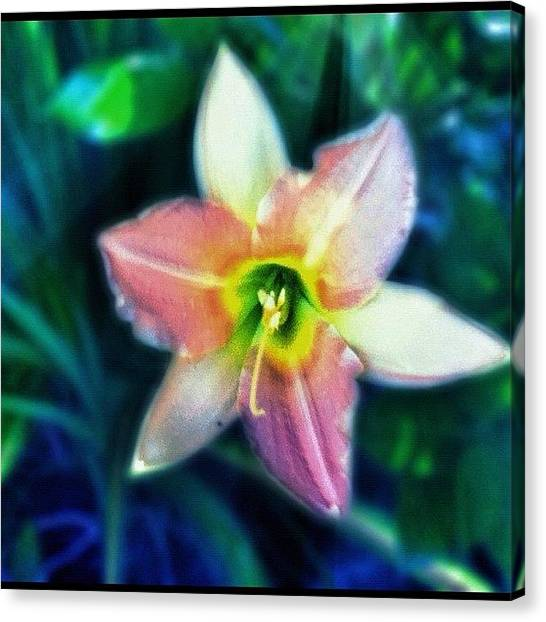 Gym Canvas Print - #flower #lily #pinklily #instalily by Aaron Justice