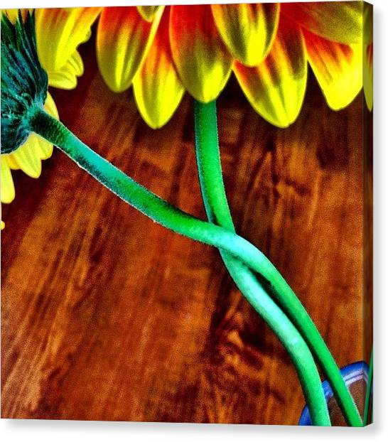 Love Canvas Print - Flower Love by Christopher Campbell