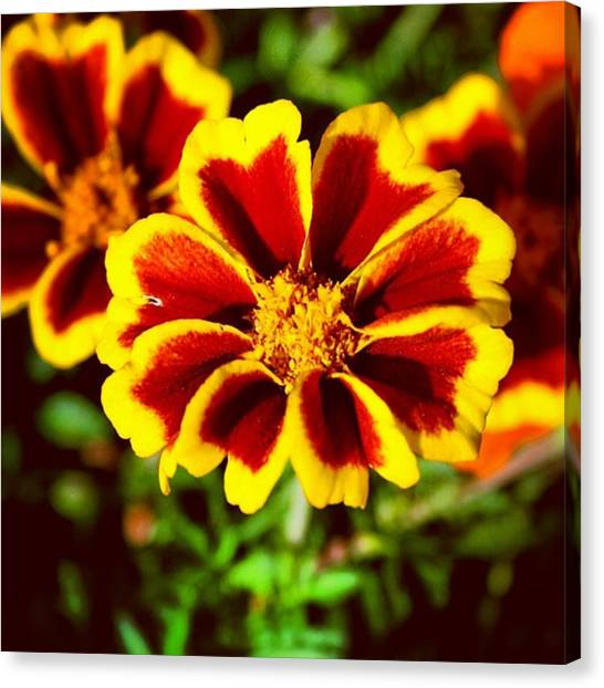 Yellow Canvas Print - Flower by Luisa Azzolini