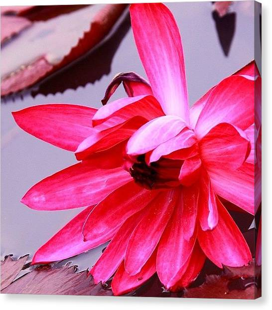 Girl Canvas Print - #flower #nature #instahub #instagood by Tommy Tjahjono