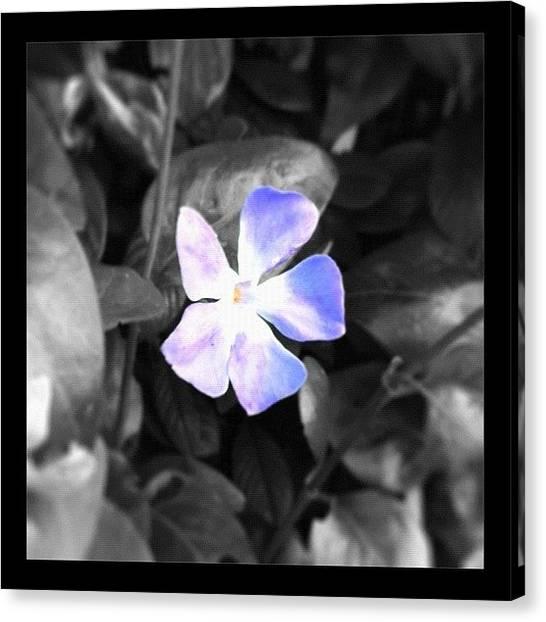 Berries Canvas Print - #flower #purple #nature #pretty by Christine Cherry