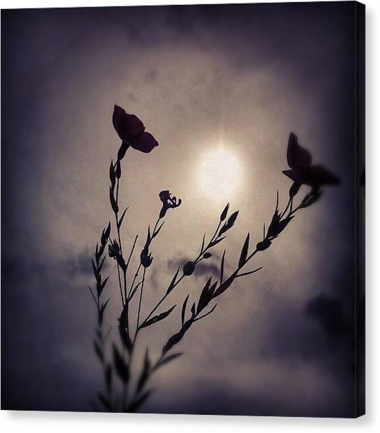 Back Canvas Print - #flower #sun #hometown #albertslund by Ole Back