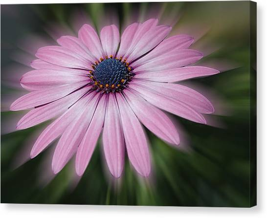 Flower Zoom Canvas Print
