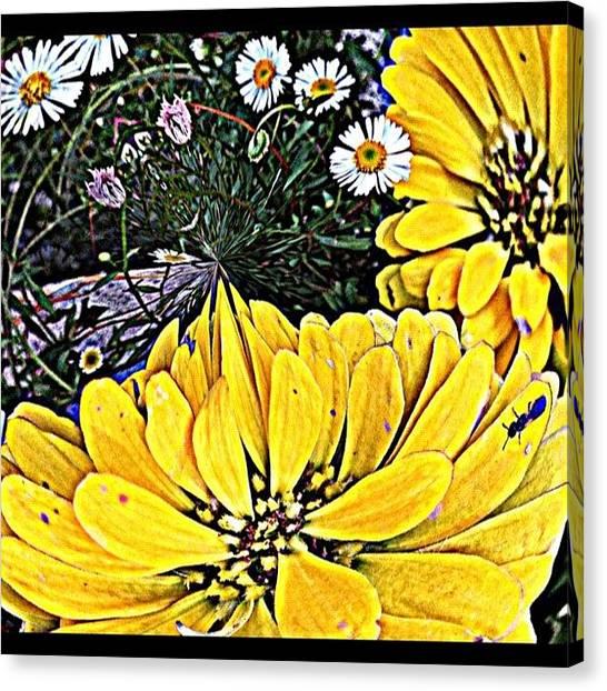 Ants Canvas Print - #flower#flowers #fleabane #ant#mygarden by Rita Frederick