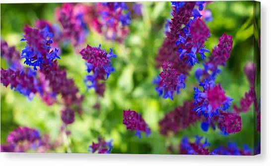 Flowers Canvas Print by Guillermo Luengas