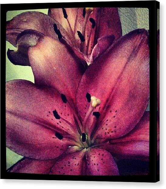 Outer Space Canvas Print - #flowers #lilies #purple #red #gorgeous by Alien Alice
