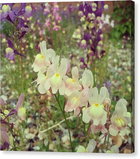Social Canvas Print - #flowers, #summer, #colourful by Rykan V