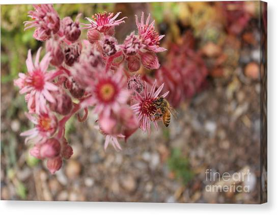 Flowers With Bee Canvas Print