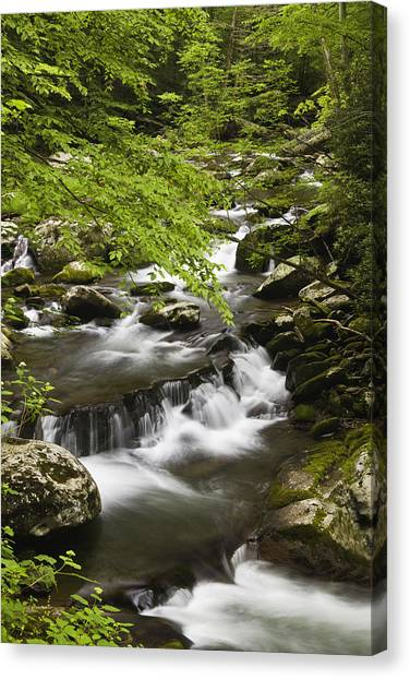 Little River Canvas Print - Flowing Mountain Stream by Andrew Soundarajan