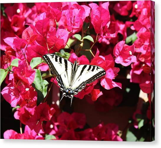 Flutter By Canvas Print