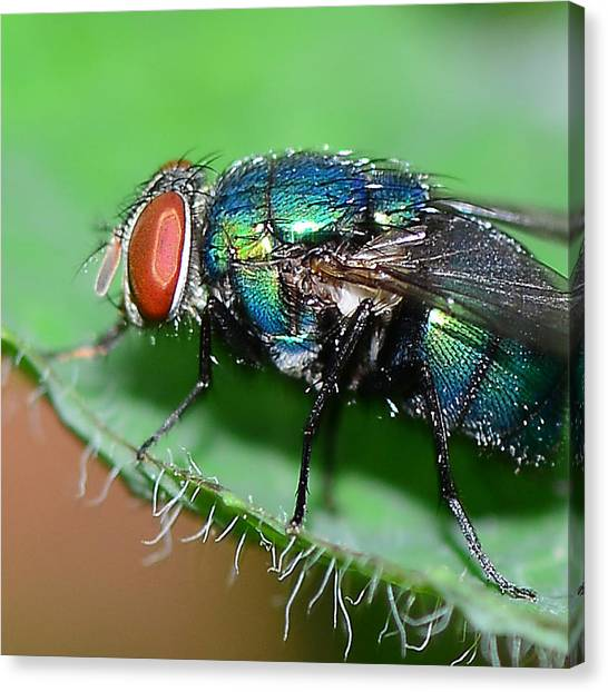 Fly Canvas Print by Michelle Armstrong