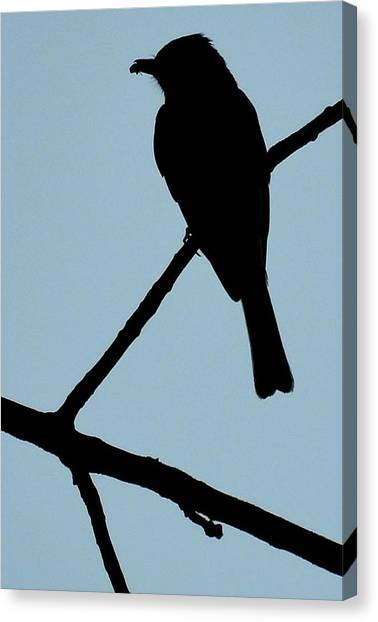 Flycatcher With Bug Canvas Print