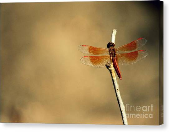 Flying Colours Canvas Print by Vishakha Bhagat