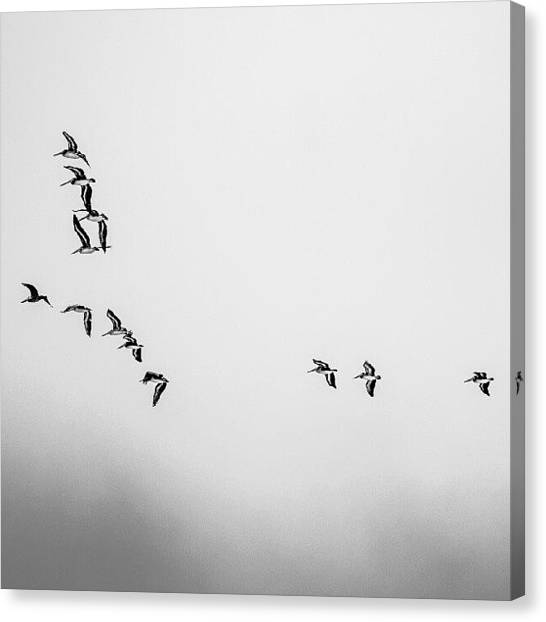 Independent Canvas Print - Flying Experts by San Gill