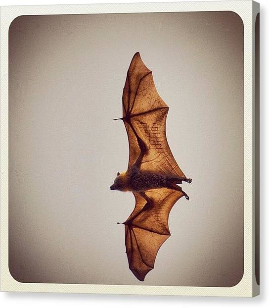 Bat Canvas Print - Flying Fox by Addie Dordoma