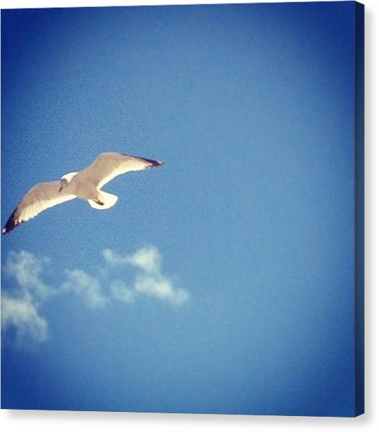 Flying Canvas Print - Flying' High #bird #seagull #flying by Emily W