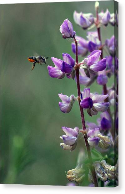 Flying In Canvas Print