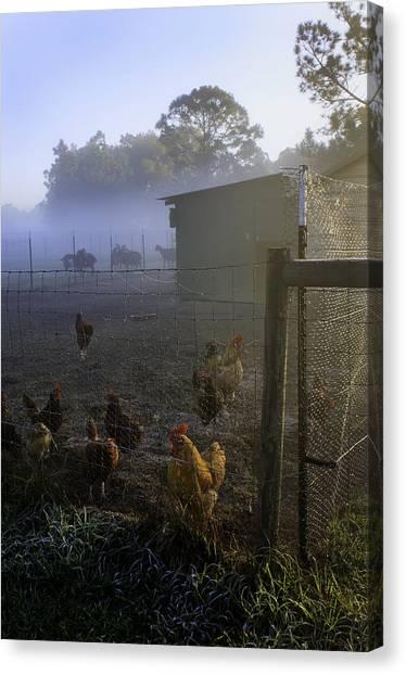 Foggy Florida Farm Morning Canvas Print