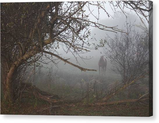 Foggy Horse Canvas Print