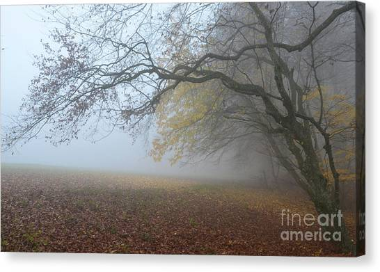 Fogy Forest In The Morning 1 Canvas Print