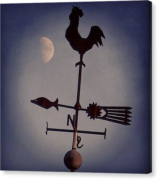 Roosters Canvas Print - Follow My Voice by Carlos Macia Perez