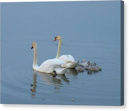 Following Mommy And Daddy Canvas Print by Jeanette Oberholtzer