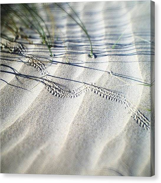 Beetles Canvas Print - Footprints In The Sand by Nicole Spillane