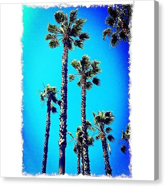 Grove Canvas Print - For The #love Of #palmtrees...took This by Debi Tenney