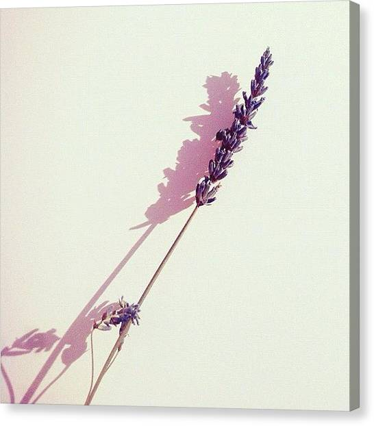 Lavender Canvas Print - For You. And You Know by Francesca Sara