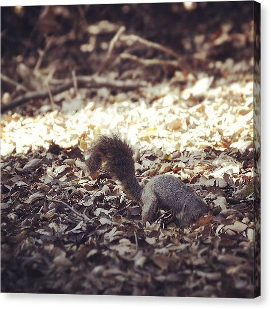 Squirrels Canvas Print - Foraging by S Michelle Reese