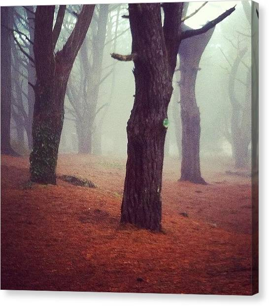 Foggy Forests Canvas Print - #forest #creepy #fog #foggy #trees by Andy Brown