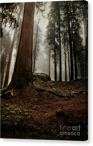 Forest Floor And Fog Canvas Print