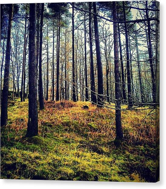 Woods Canvas Print - Forest In Cumbria by Nic Squirrell
