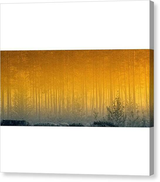 Foggy Forests Canvas Print - Forest In Mist #iphonesia #instagood by Robin Hedberg