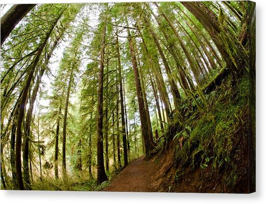Canvas Print featuring the photograph Forest Love by Margaret Pitcher