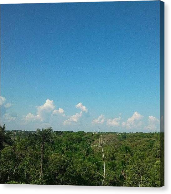 Rainforests Canvas Print - Forest Manaus Am Brazil by Augusto Costa