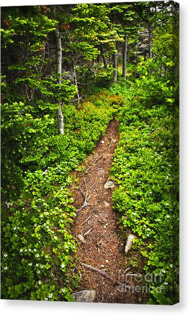 Forest Paths Canvas Print - Forest Path In Newfoundland by Elena Elisseeva