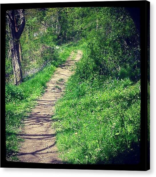 Forest Paths Canvas Print - #forest #path #wales #now #sunny by Alexandra Cook