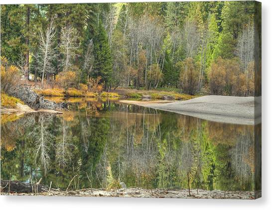 Forest Reflection-merced River Canvas Print by Ron Schwager