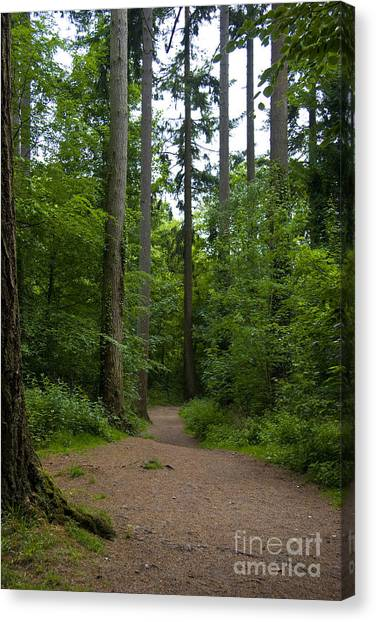 Forest Trail Canvas Print by Ron Telford