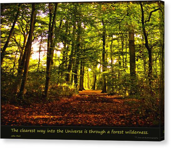 Forest Wilderness Canvas Print