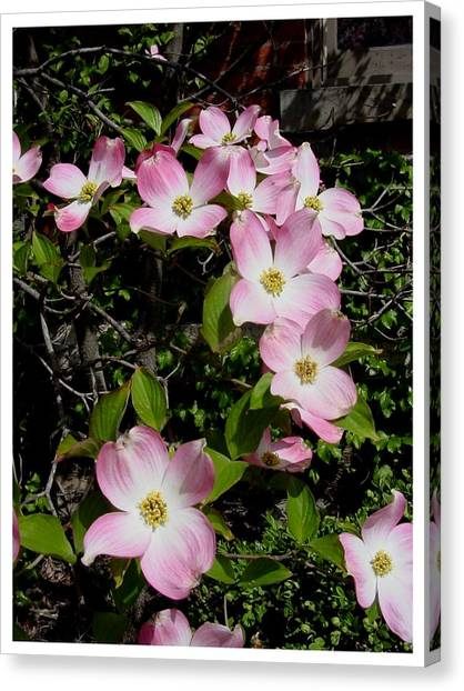 Forever Dogwood Canvas Print