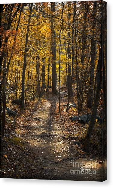 Forrest Of Gold Canvas Print