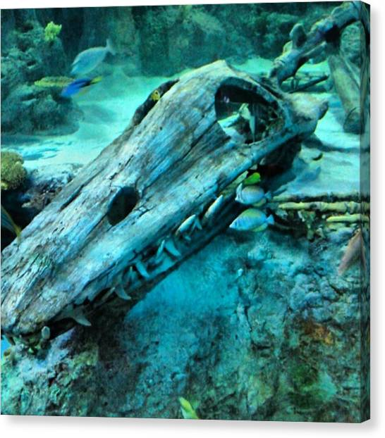 Aquariums Canvas Print - #fossil #hdr #hdr_lovers #creation by Kel Hill