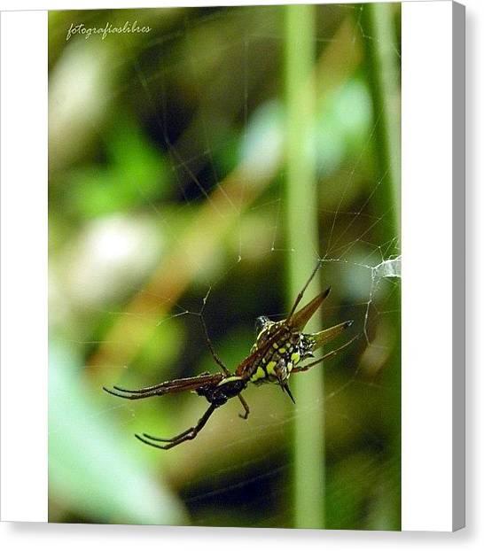 Spider Web Canvas Print - #fotografía #araña #telaraña by Fotografias Libres