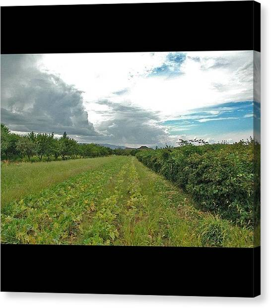 Orchard Canvas Print - Found This Field Today At The Orchards by Brolin Roney