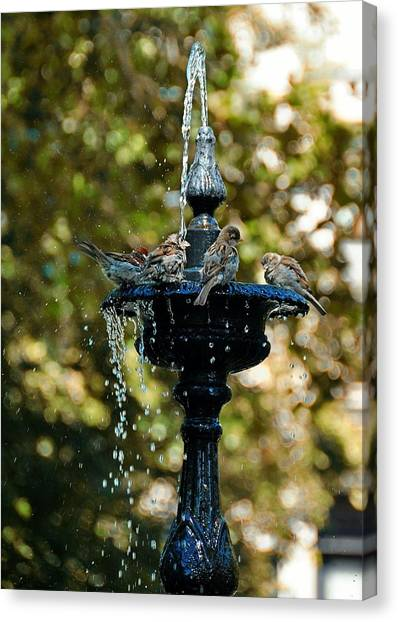 Fountain Bathing Canvas Print by JAMART Photography